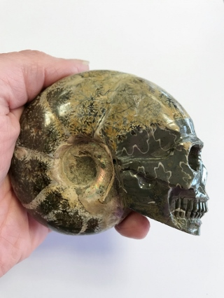 Ammonite Crystal Skull from Crystal Skulls
